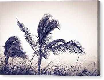 Palms 4 Canvas Print