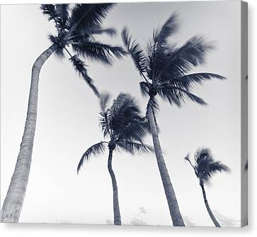Palms 5 Canvas Print