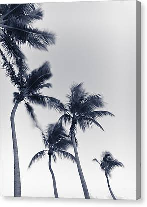 Palms 6 Canvas Print