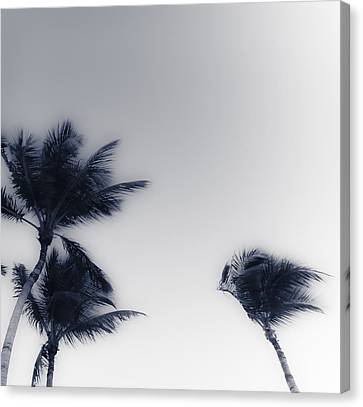 Palms 7 Canvas Print