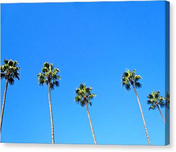Palms Canvas Print by JBDSGND OsoPorto