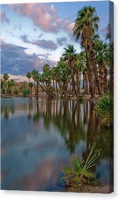 Palms Trees Over Papago Lake Canvas Print by Dave Dilli