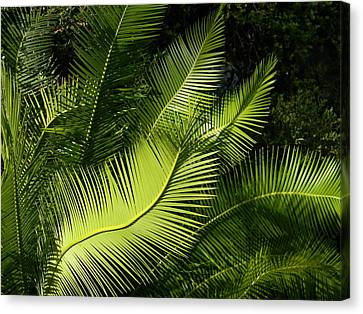 Canvas Print featuring the photograph Palms Waving At The Sun by Jodi Terracina