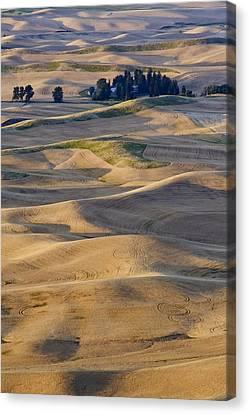 Palouse Harvest Canvas Print