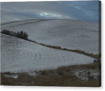 Palouse Winter 1 Canvas Print by Mary McInnis