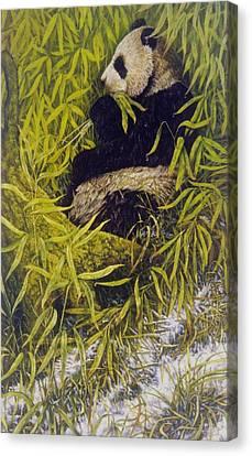 Panda Canvas Print by Steven Wood