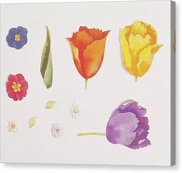 Pansies And Tulips Canvas Print