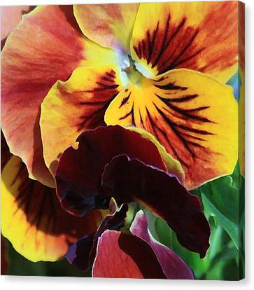 Canvas Print featuring the photograph Pansies by Donna Corless