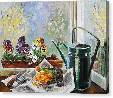 Pansies For My Window Box Canvas Print by Barbara Pommerenke