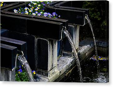 Pansy Fountain Canvas Print by Toma Caul