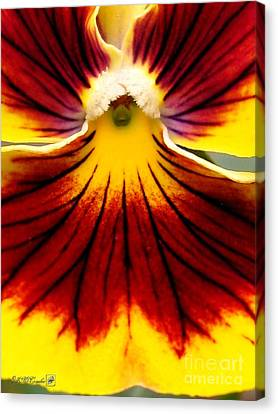 Canvas Print featuring the photograph Pansy Named Imperial Gold Princess by J McCombie