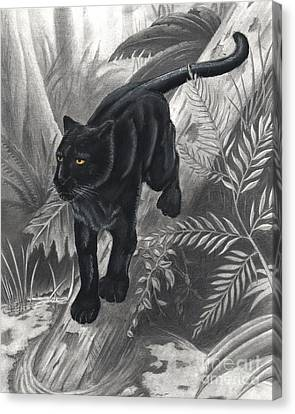 Panther By The Water Canvas Print