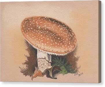 Panther Cap Canvas Print by Sherri Strikwerda