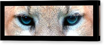 Panther Eyes Canvas Print by Sumit Mehndiratta