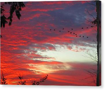 Canvas Print featuring the photograph Papaya Colored Sunset With Geese by Kym Backland
