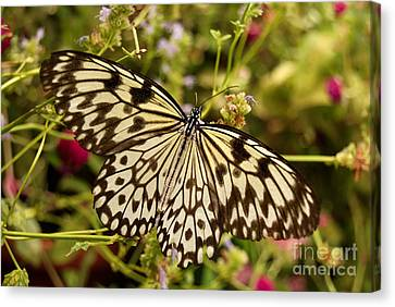Canvas Print featuring the photograph Paper Kite Butterfly by Eva Kaufman