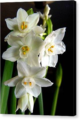 Canvas Print featuring the photograph Paperwhites by Robin Dickinson