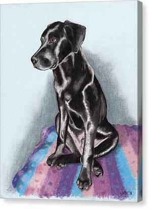 Papi The Labby Canvas Print by Sherri Strikwerda