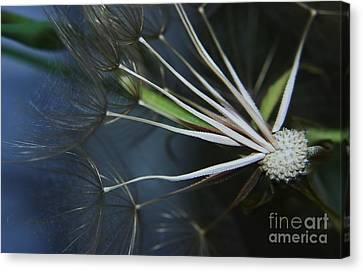 Parachute Seeds  Canvas Print by Jeff Swan