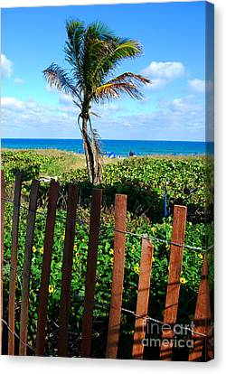 Paradise Beyond The Fence Line Canvas Print by Linda Mesibov