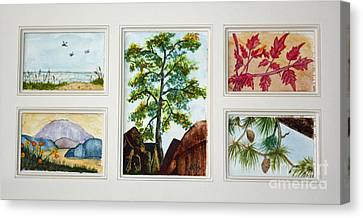Parcels Of Nature Canvas Print by Terri Mills
