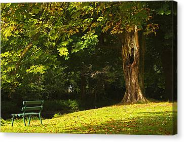 Park Bench Beside The Owenriff River In Canvas Print by Trish Punch