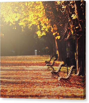 Park Benches In Fall Canvas Print by Julia Davila-Lampe