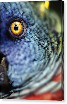 Parrot, Close Up Canvas Print by Axiom Photographic