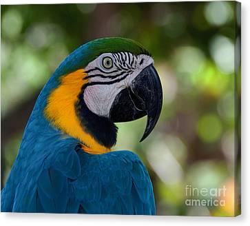 Parrot Head Canvas Print by Art Whitton
