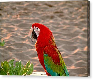 Canvas Print featuring the photograph Parrot In Maui by Rob Green