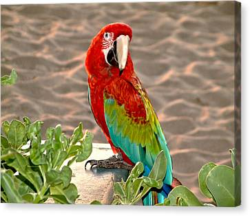 Canvas Print featuring the photograph Parrot Sunning On The Beach by Rob Green