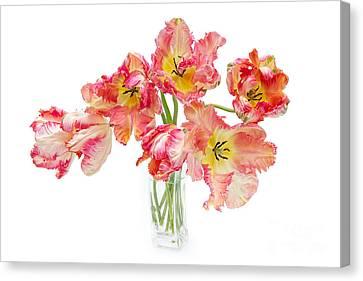 Parrot Tulips In A Glass Vase Canvas Print by Ann Garrett