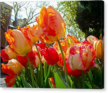 Parrot Tulips In Philadelphia Canvas Print