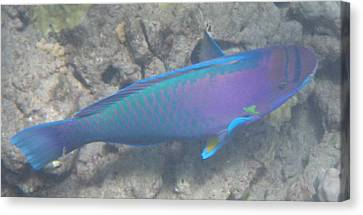 Canvas Print featuring the digital art Parrotfish by Erika Swartzkopf