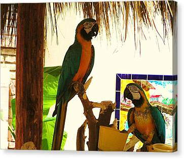 Canvas Print featuring the photograph Parrots Of Penasco by Rand Swift