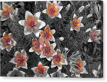 Pasqueflower In Silver Canvas Print
