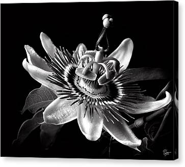 Passion Flower In Black And White Canvas Print by Endre Balogh