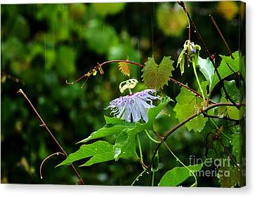 Passion Flower In The Rain Canvas Print by Theresa Willingham