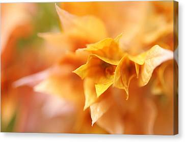 Passion For Flowers. Orange Delight Canvas Print by Jenny Rainbow