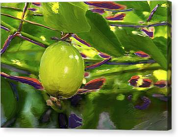 Passion Fruit Canvas Print by Miguel Pumarejo