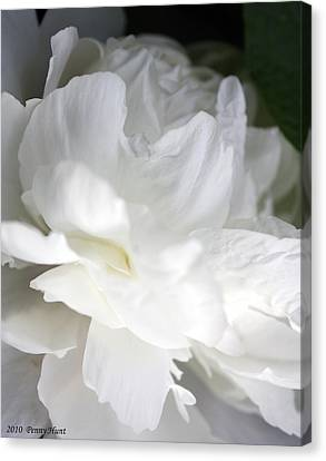Canvas Print featuring the photograph Passionate About Peonies by Penny Hunt