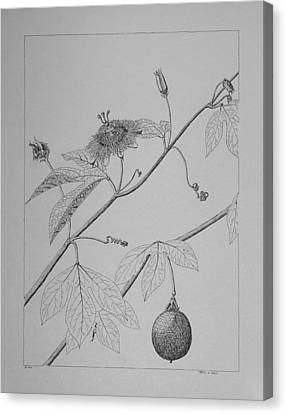 Canvas Print featuring the drawing Passionflower Vine by Daniel Reed