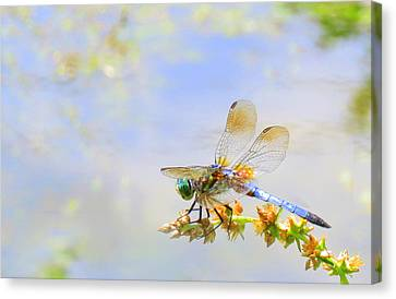 Canvas Print featuring the photograph Pastel Dragonfly by Deborah Smith