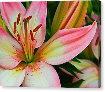 Pastel Pretty Canvas Print by Lynne Jenkins