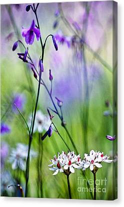 Pastel Wildflowers Canvas Print by David Lade
