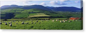 Pastoral Scene Near Anascual, Dingle Canvas Print by The Irish Image Collection
