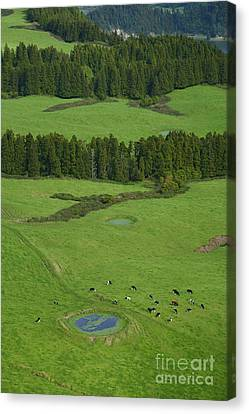 Pastures In Azores Islands Canvas Print