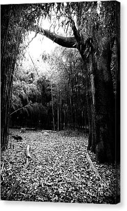 Patch Of Light Canvas Print by John Rizzuto