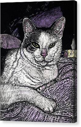 Patches The Cat Canvas Print by Robert Goudreau