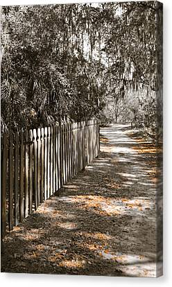 Path Along The Fence Canvas Print by Carolyn Marshall